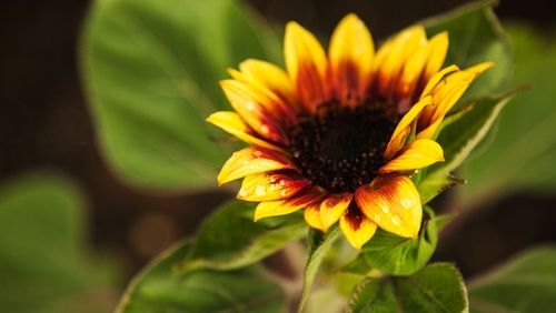 flowerimage1