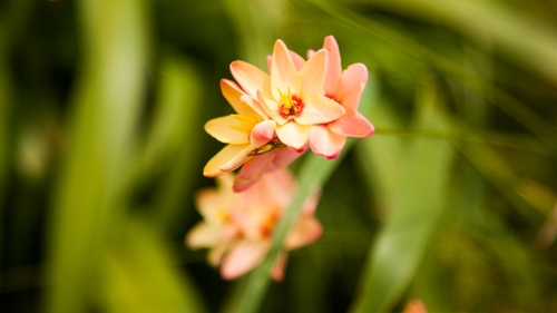 flowerimage3